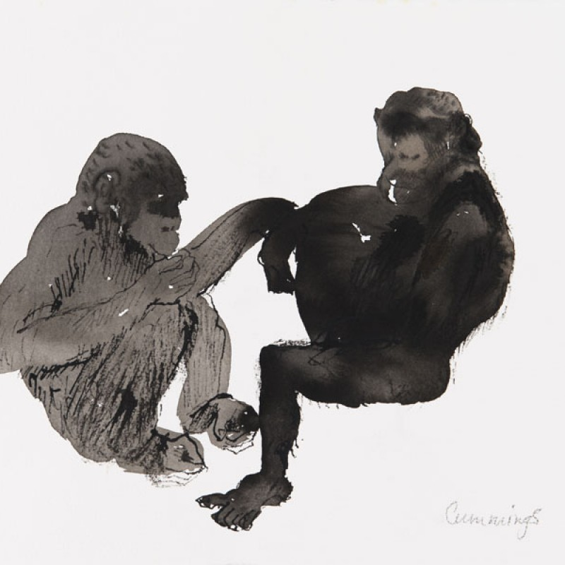 Two Chimpanzees at Taronga Zoo