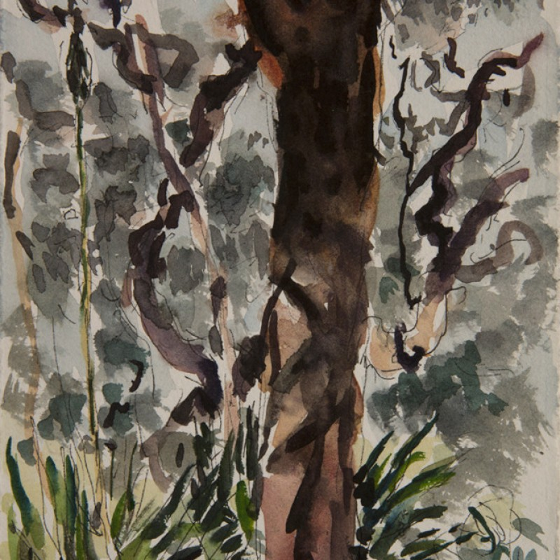 Angophera forest, Otford