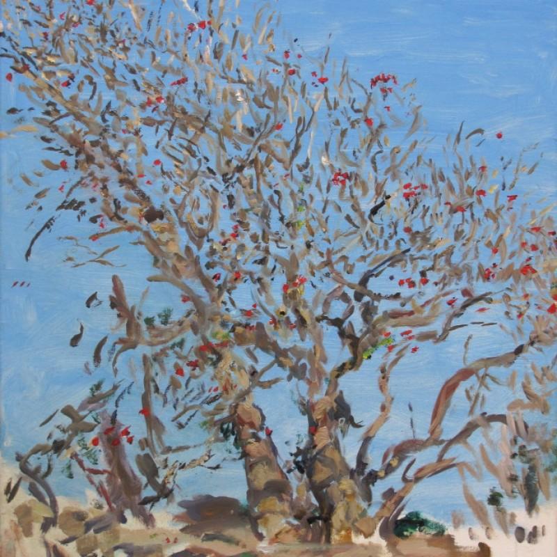 Coral tree, Botany