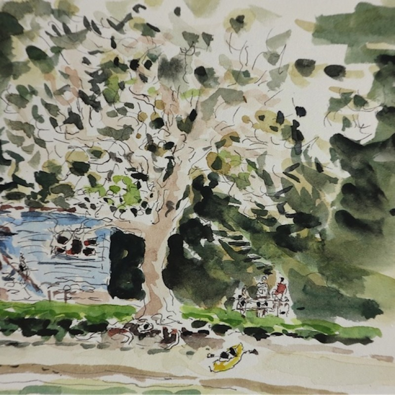 Coral tree, Currarong