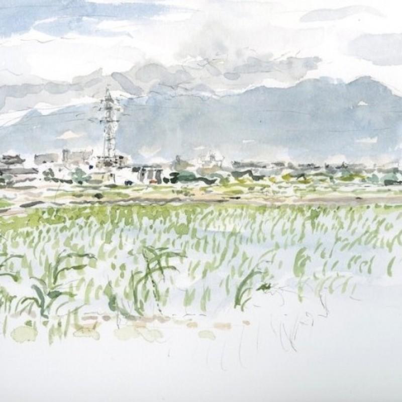 Flooded rice paddy, Saga [Japan]