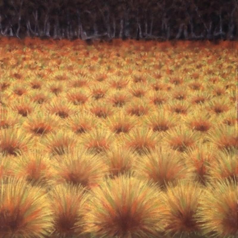 The Button Grass Plain