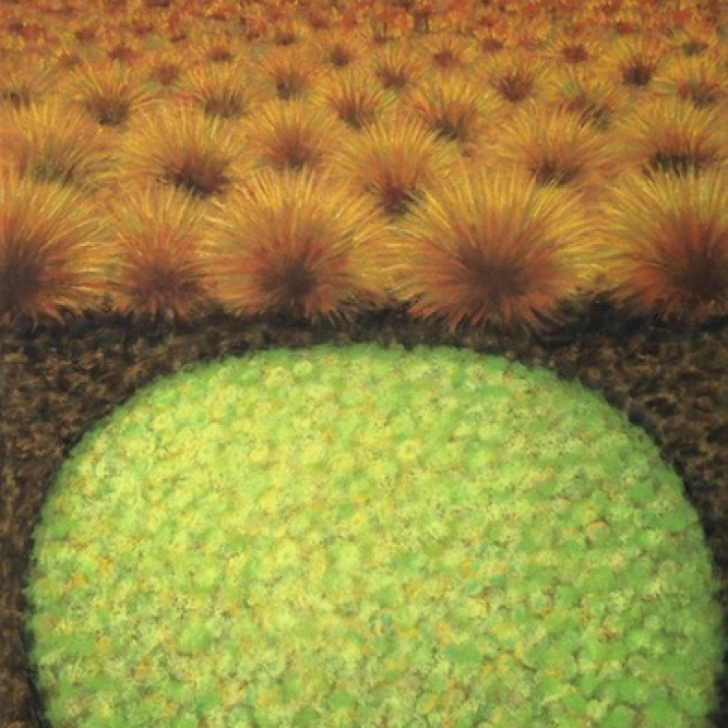 Cushion Plant and Button Grass