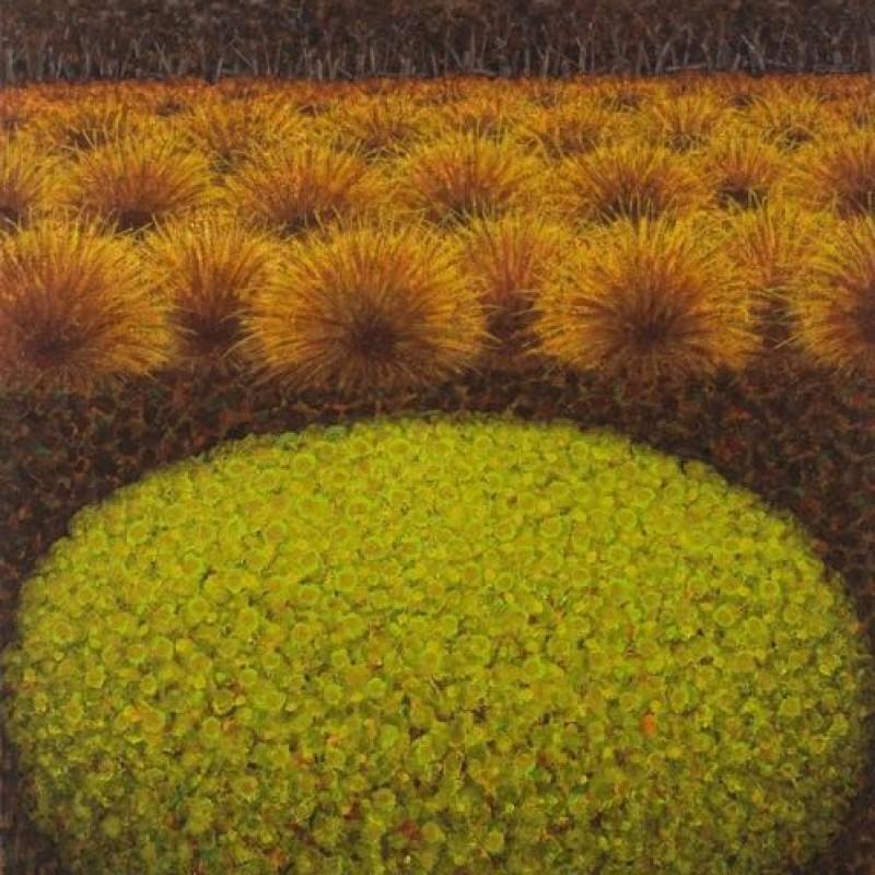 Cushion Plant, Skullbone Plains