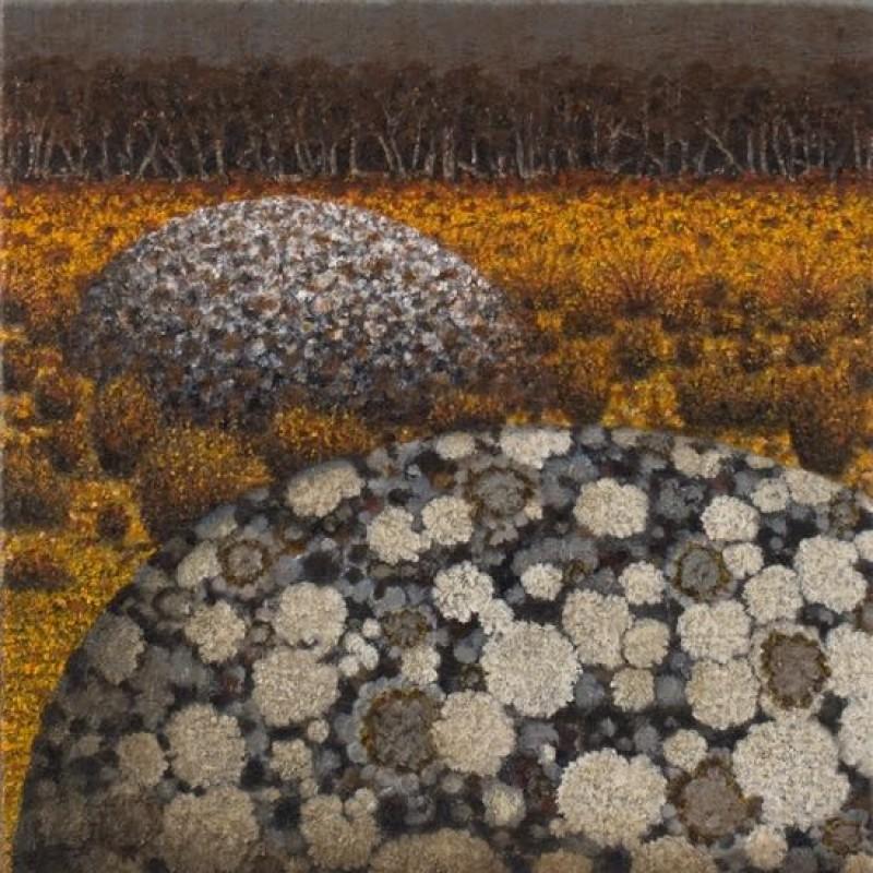 Lichen Patterns upon Ice-Age Granite