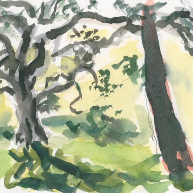 Morning trees, Centennial Park