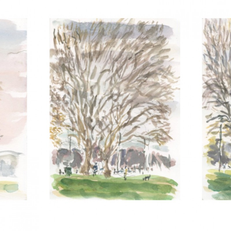 Winter plane trees, Rushcutters Bay Park (triptych)