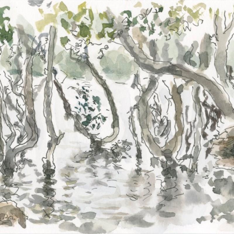 High tide mangroves, Mooney Mooney