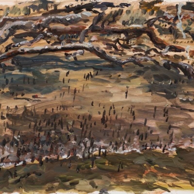 Mangroves, Smiths Creek IV