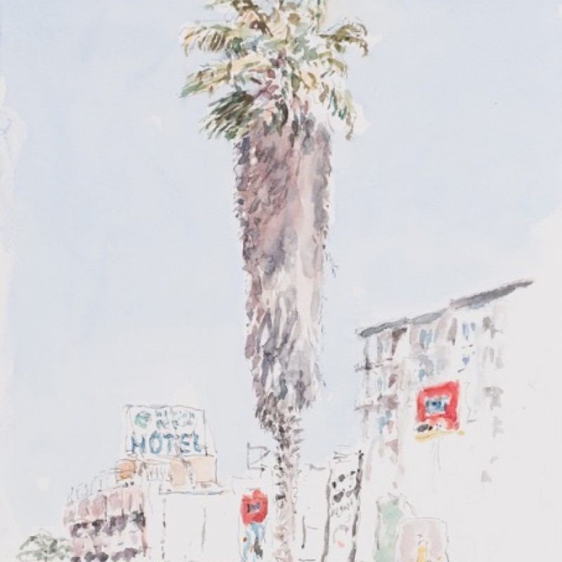Palm Tree, West Coast Drive, Perth