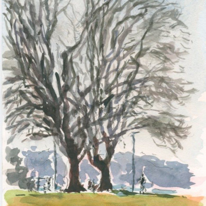 Plane trees near the water, Rushcutters Bay