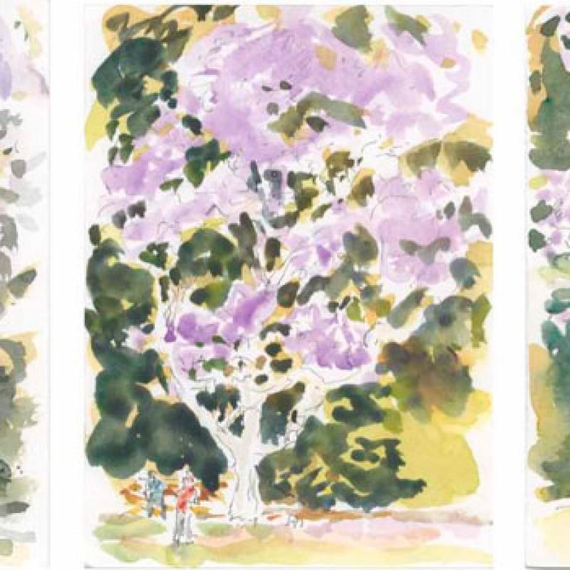 Jacaranda, Botanical Gardens triptych