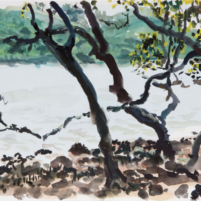 Through the mangroves, Mooney Mooney