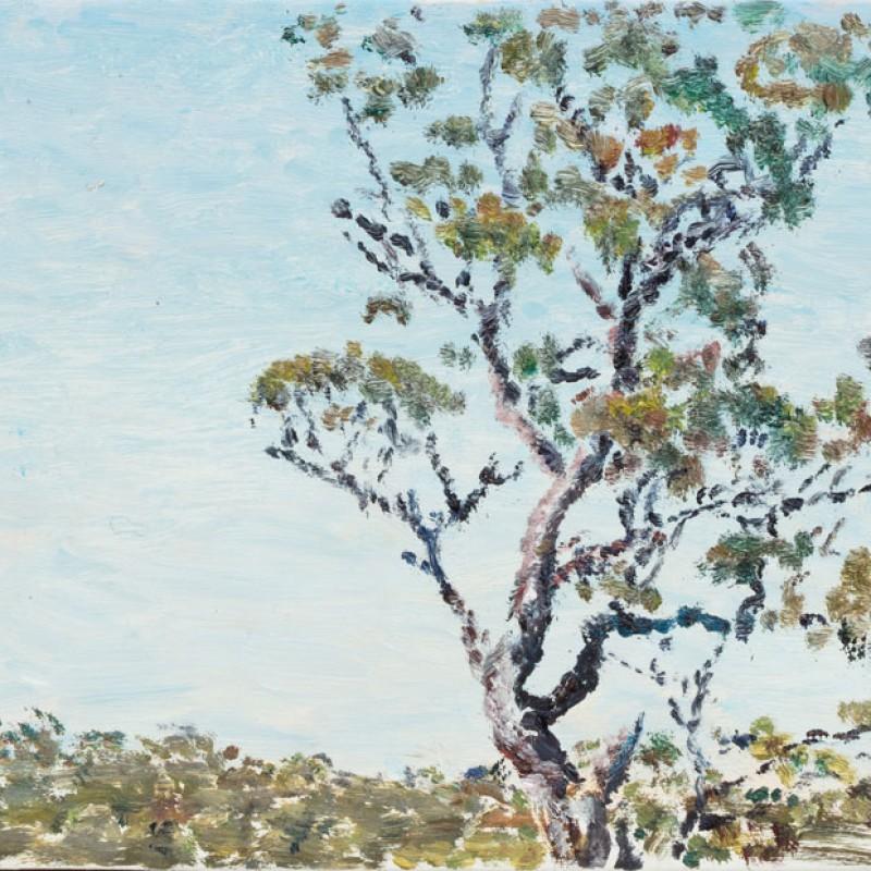 Big eucalypt, Torokina II