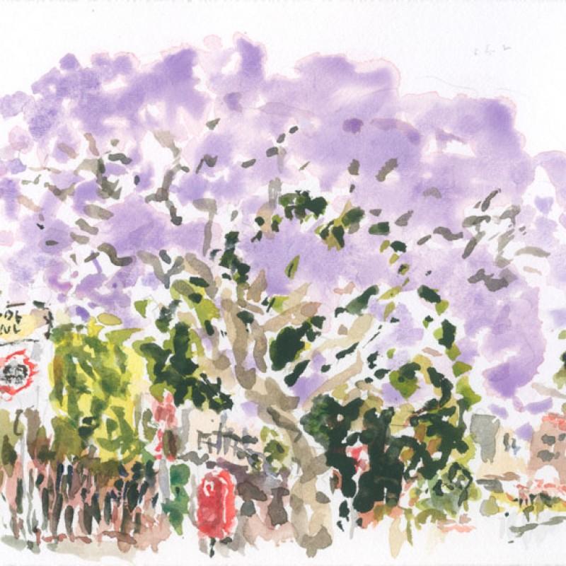 Jacaranda, Henson Street, Summer Hill