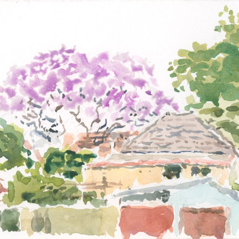 Jacaranda, behind Greenbank Road, Marrickville