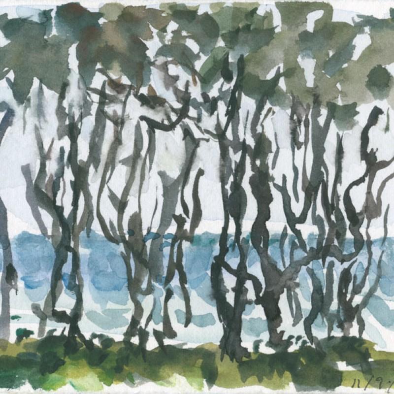 Through the trees, Kingscliff