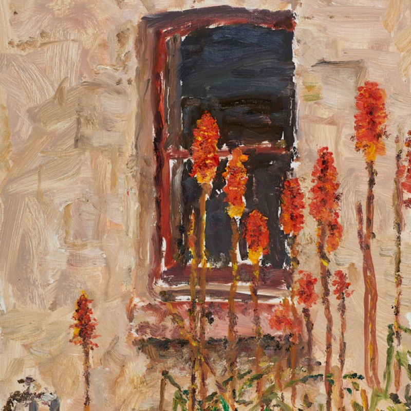 Poker flowers outside the kitchen, Mount Lofty (study)