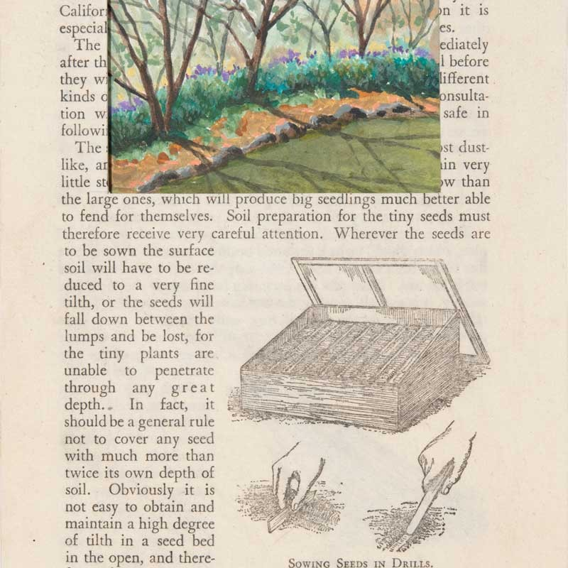 Looking at Lavender Hillston Page 43