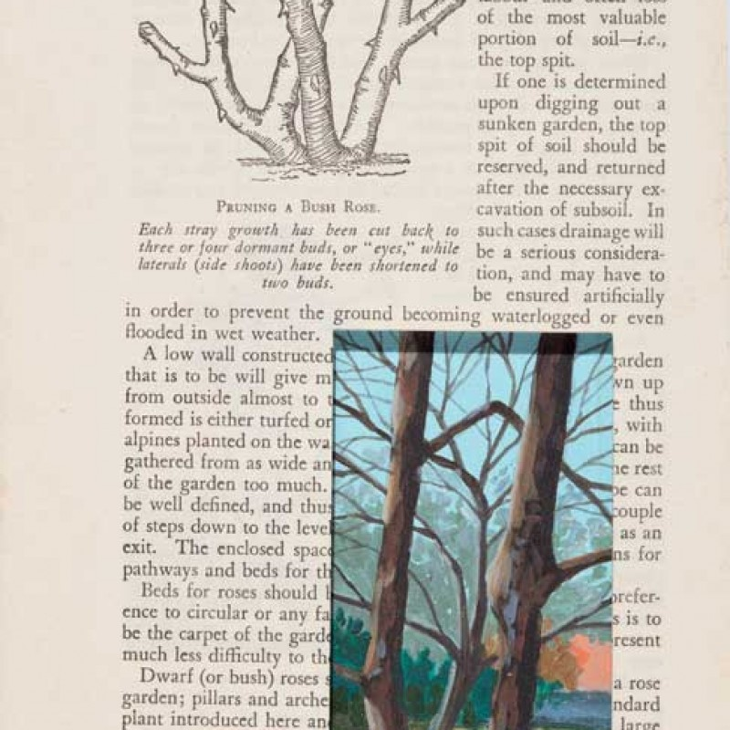 Plum Between Trees Hillston Page 86