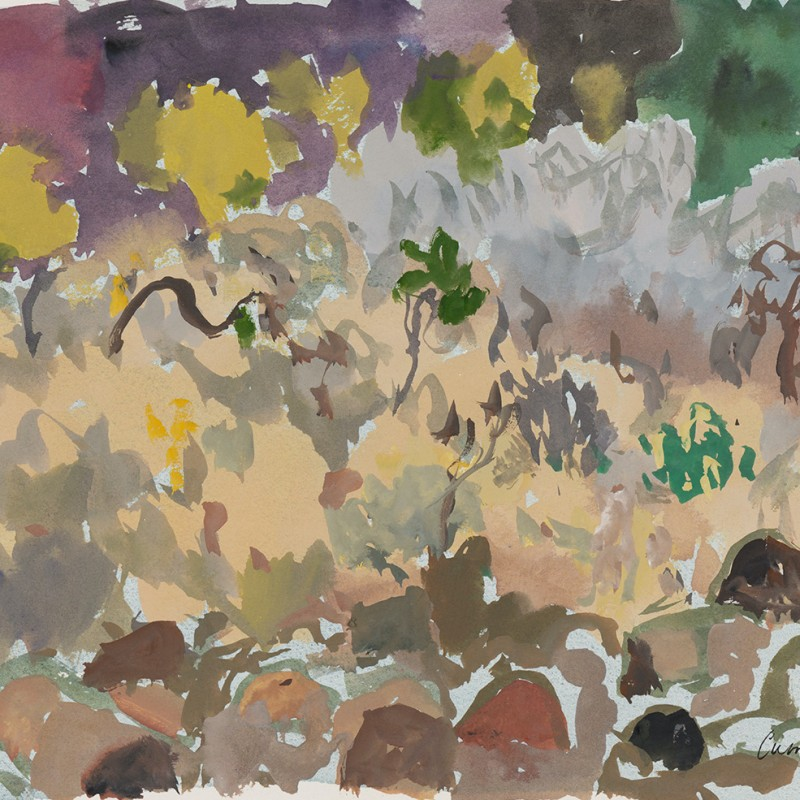 Grasses + bush + rocks N'Dhala Gorge