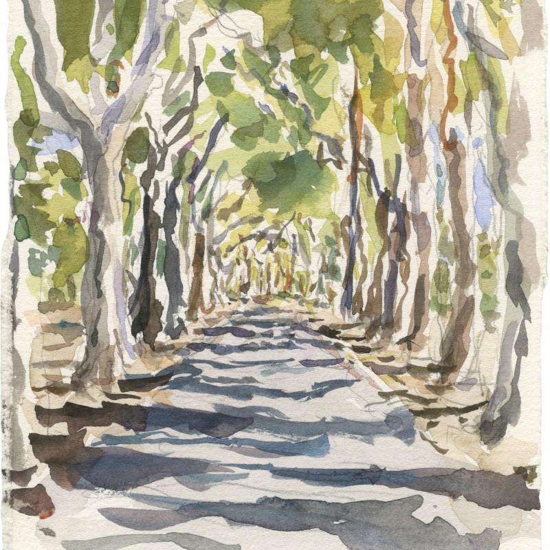 Avenue of Sugar Gums, Adelaide Parklands