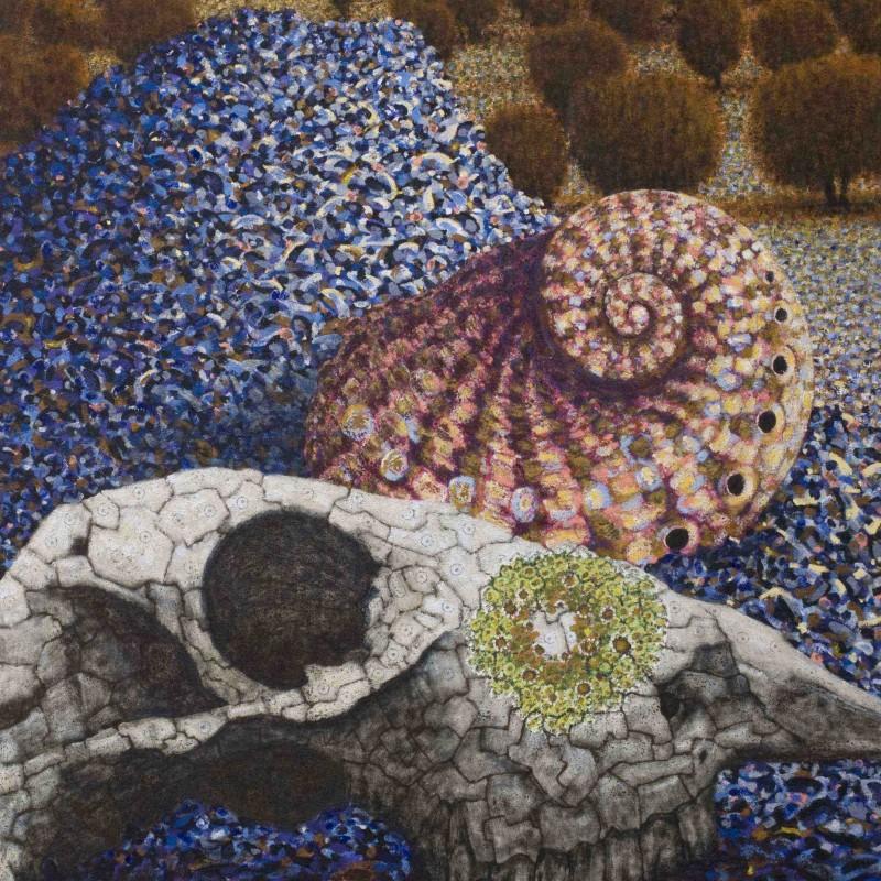 Sheep Skull and Shell
